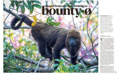 Blandt brøleaber på Brasiliens bounty-ø